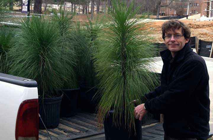Jim Ferrari empties truck bed of longleaf pines.
