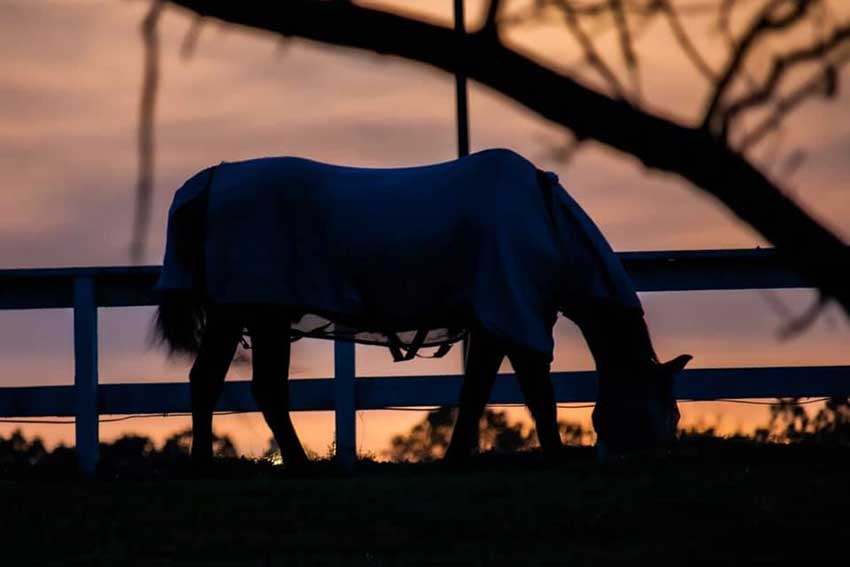 Silhouette of horse during sunset.