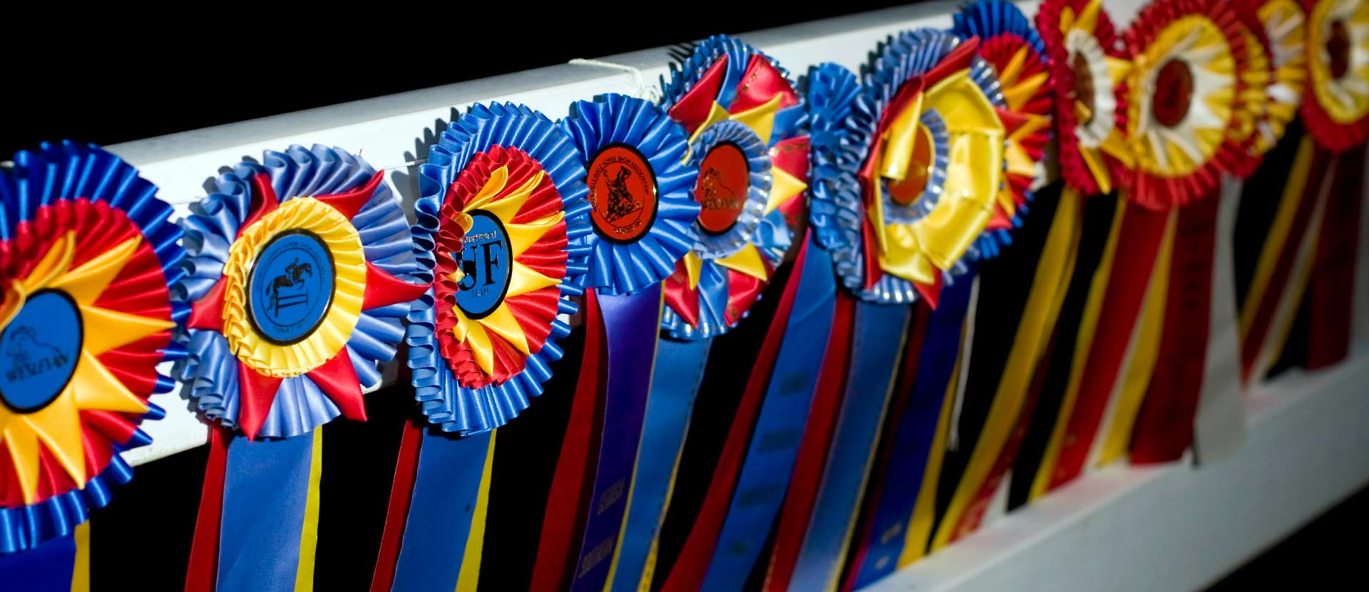 Eleven Awards ribbons tacked to white fence.